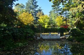 初秋湖泊树木风景图片
