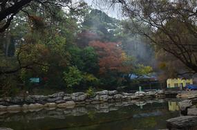 湖边树木风景