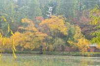 湖边树木秋景