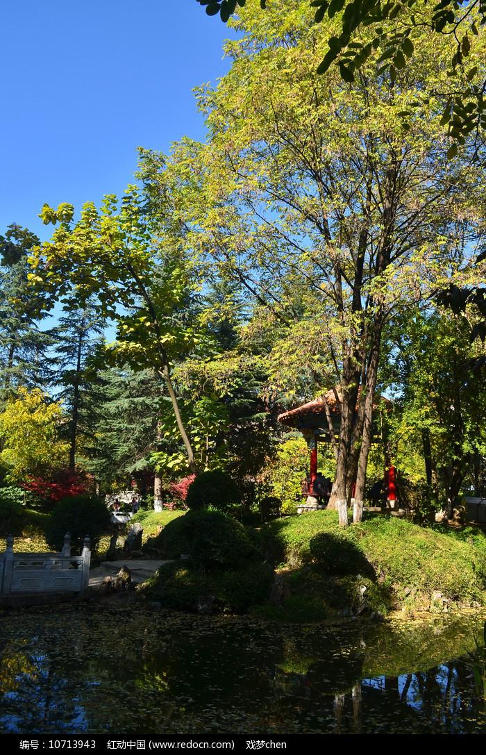 湖泊树木风景图片图片