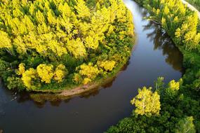 金秋密林河湾风景