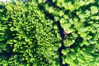 漠河林区绿色树丛小溪
