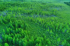 漠河绿色树林景观