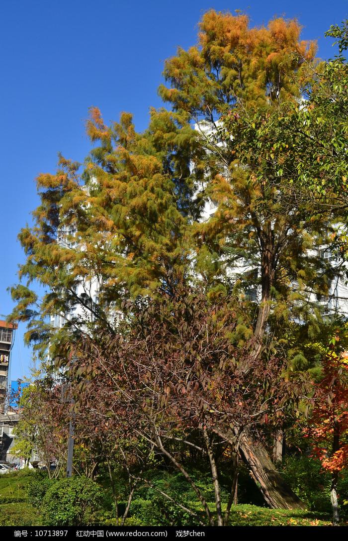 树木风景图片