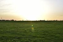 午后的草地