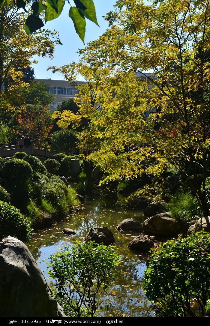 小溪树木风景图片