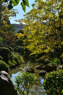 小溪树木风景