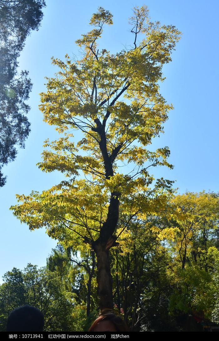 一棵树风景图片