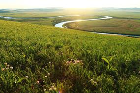 草原牧场植被丰茂