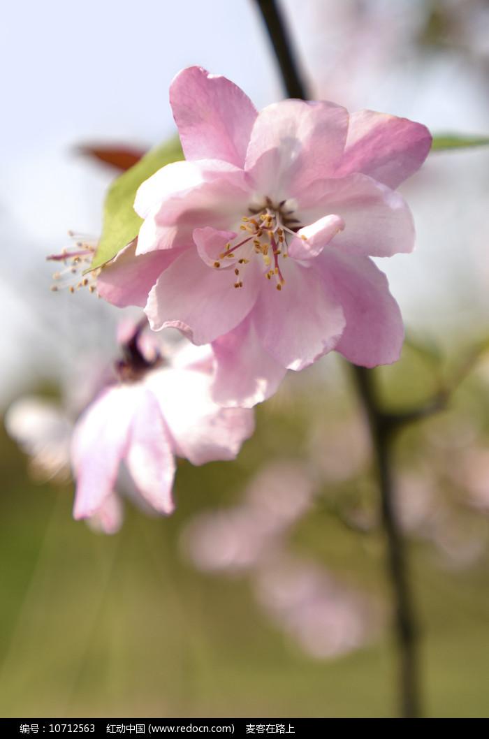 春花绽放图片