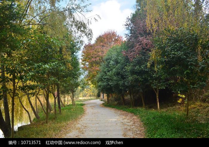 道路树林风景图片