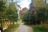 道路树林风景