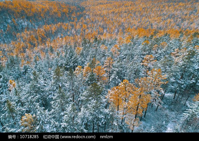 航拍大兴安岭林海彩林秋雪 图片
