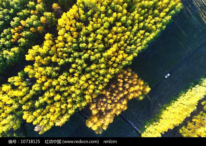 航拍金色丛林图片