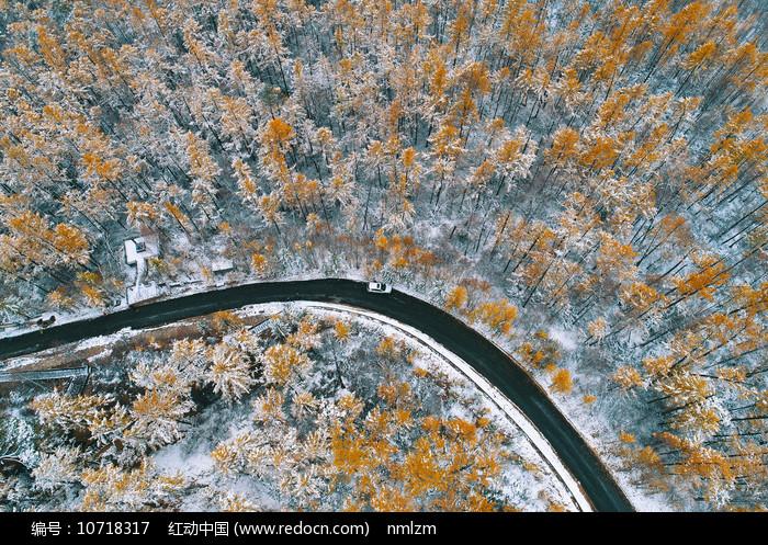 航拍金色树林山路雪景 图片