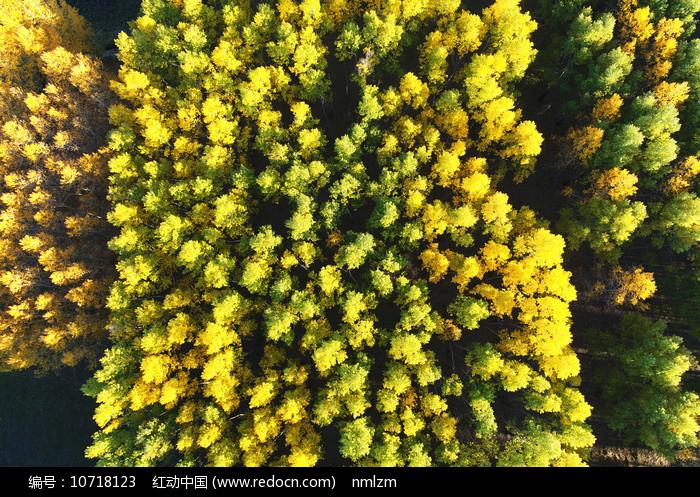 航拍秋季森林风光 图片