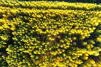 航拍秋日金色丛林