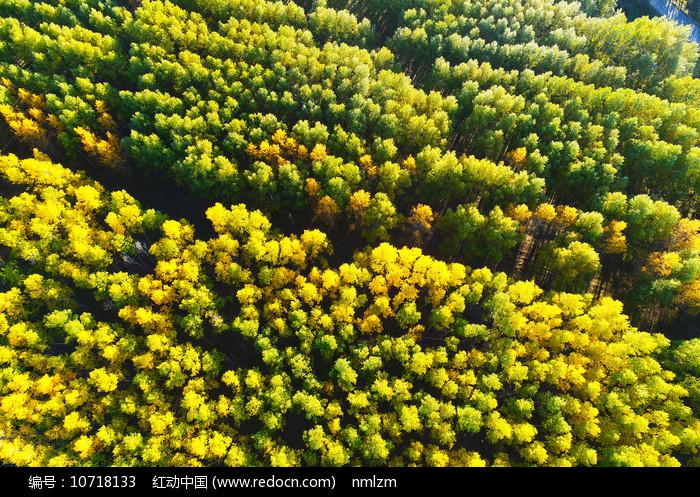航拍树林秋色 图片