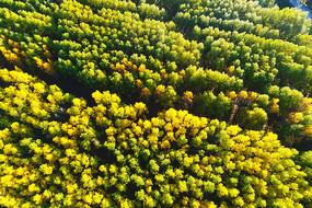 航拍树林秋色