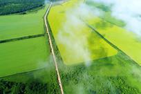 航拍云雾中的油菜花田