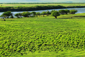 呼伦贝尔草原河岸湿地风景