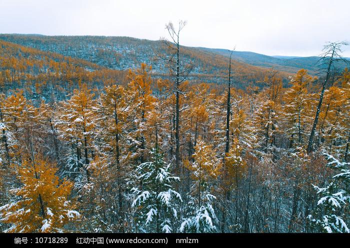 金秋彩林雪景图片