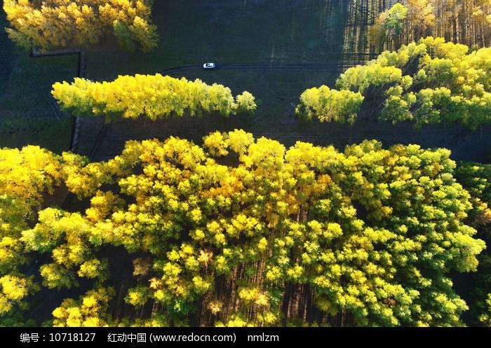 金秋丛林秋色 图片