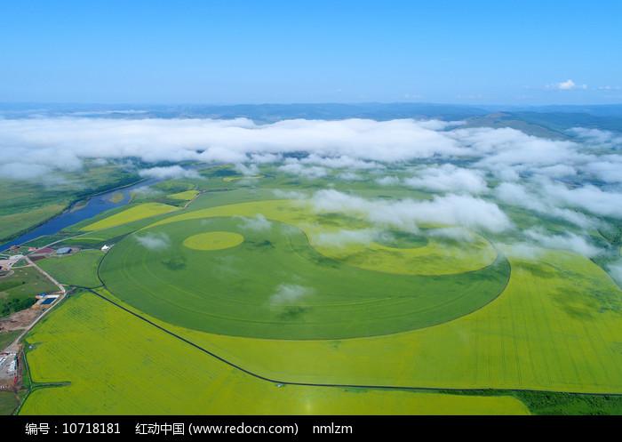 麦田和油菜花组成的太极图(航拍)图片