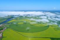 麦田和油菜花组成的太极图(航拍)