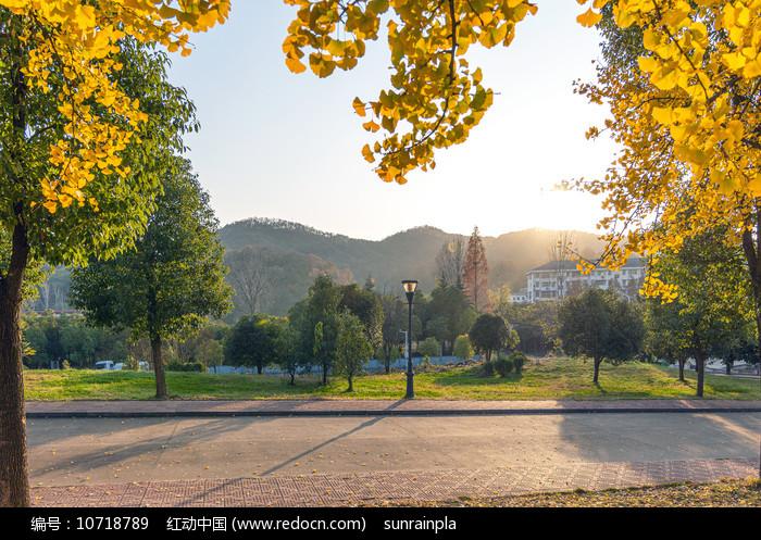 公园银杏景观图片