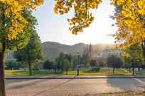 公园银杏景观