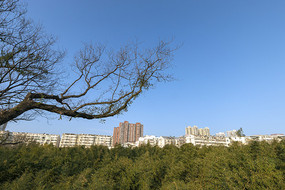 城市树林竹海
