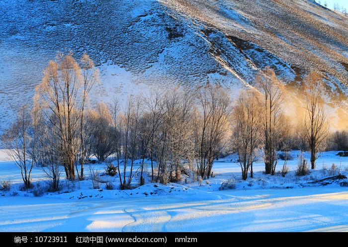 雪域树林晨雾暖阳图片