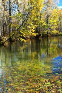 大兴安岭秋季清澈的河流