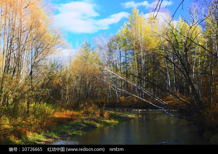 大兴安岭森林中的河流秋景图片