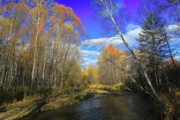 大兴安岭小河秋季彩色丛林