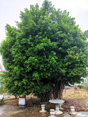 公园里的绿色树木