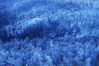 大兴安岭高寒林带山林雾凇