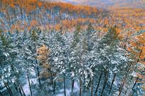 大兴安岭秋季雪色山林