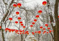 公园雪天的红灯笼