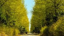 绿树下的乡村小道