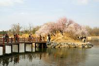 北京圆明园凤麟洲春色