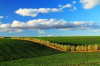东北平原农田防护林