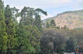 青山绿树风景