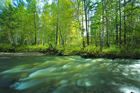 森林河流风景
