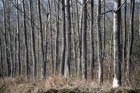 树林树干特写