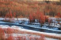 冰河红柳树林雪景