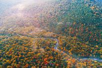 长白山晨雾迷漫的秋季森林河