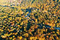 长白山林区秋季地理风光