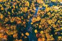 长白山森林河秋景